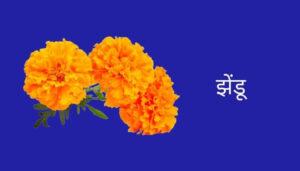 Marigold Flower Information in Marathi